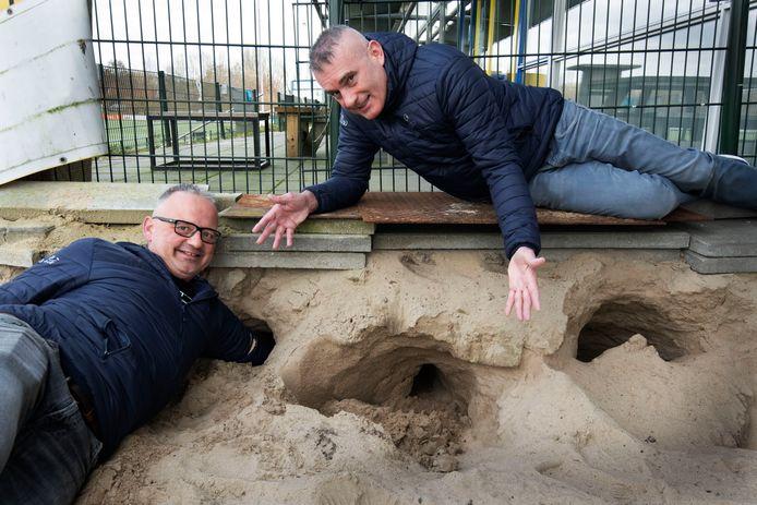 Voetbalclub Veenendaal heeft een konijnenplaag en holen. Secretaris Etiënne van Hasselt kan er zijn hele arm in steken. Vice-voorzitter Jan Bouwmeester wijst naar nog twee van de velen konijnenholen onder het terras.