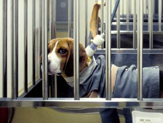 """Helft meer proeven op honden bij Janssen Pharma: """"We doen dit niet voor ons plezier"""""""
