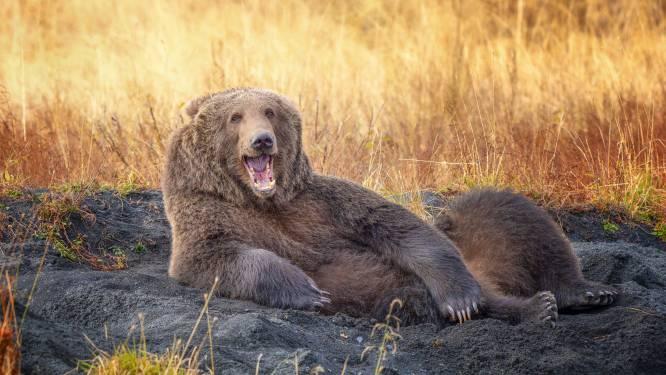 IN BEELD. Dansende beren en lachende slang: dit zijn de grappigste dierenbeelden die kans maken op de 'Comedy Wildlife Photography Awards'