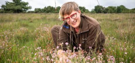 Voor pimpelpaars bloeiende heide moet je nu in Buurserzand zijn (of in andere heidevelden)