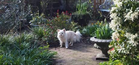 Zo zorgt Sonja voor blijere planten in haar tuin: 'Je ziet dat steeds meer planten zich weten te handhaven'
