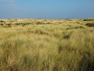 Wind krijgt opnieuw vrij spel in natuurgebied Westhoekreservaat