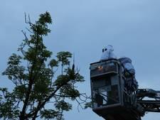 Brandweer haalt met hoogwerker groot bijennest uit de boom