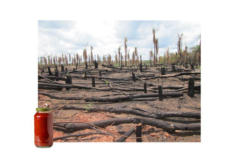 Pastasaus met palmolie kopen? Daar ziet u het gevolg:gekapt Amazonewoud. Beeld Getty