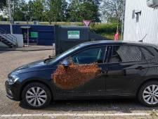Dat is even schrikken: bestuurder treft duizenden bijen aan op portier van zijn auto