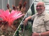 Cactusliefhebber Sjef (82) is een geduldig man