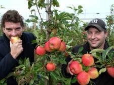 Betuwse Maribelle heeft vaste plek op fruitschaal veroverd: 'Gewoon een goed product'
