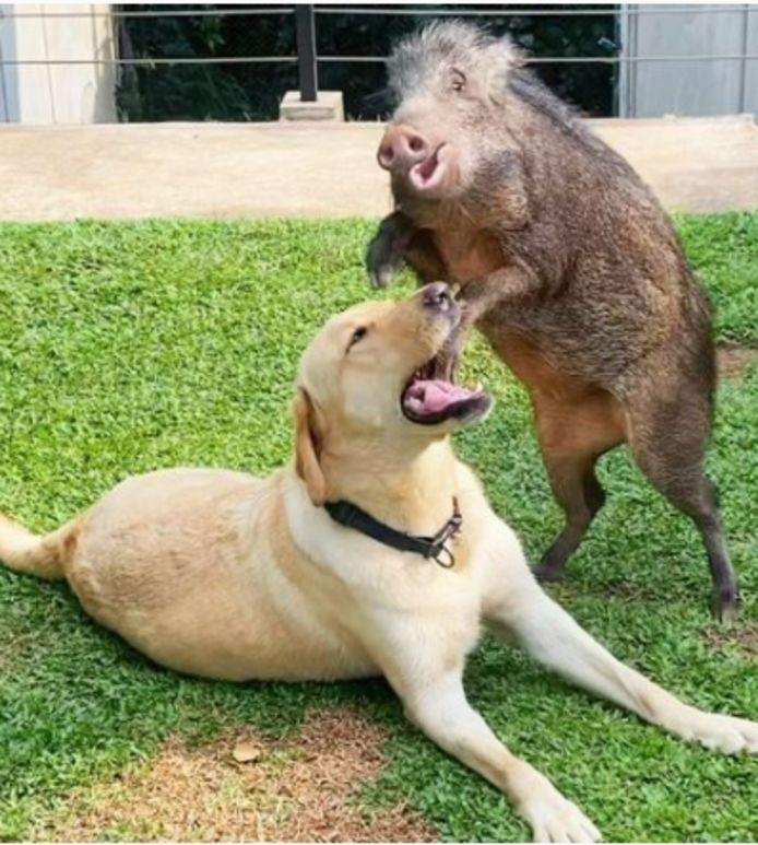 """Yezhu et son """"meilleur ami"""" Biubiu, le labrador de la famille."""