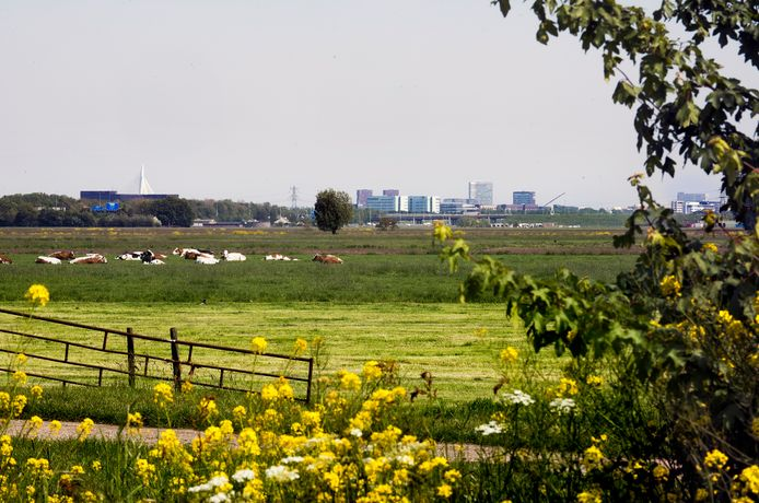 De polder Rijnenburg, hier wordt straks mogelijk naar aardwarmte geboord.