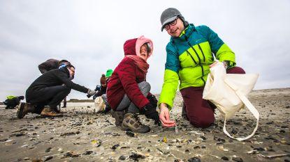 100.000 schelpen verzamelen, dat is het doel van de tweede Grote Schelpenteldag
