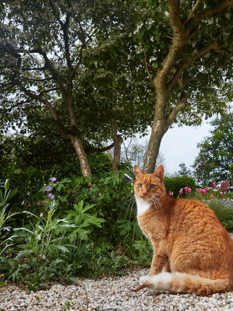 Tommy (12), huiskat, Weesp. Beeld Isabella Rozendaal