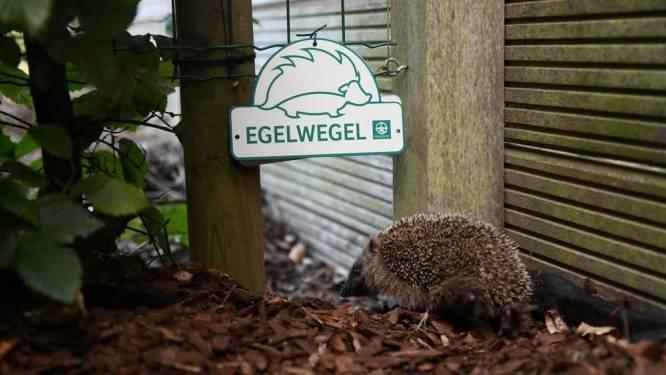 Stad en Natuurpunt belonen 'langste egelstraat' met buurtfeest
