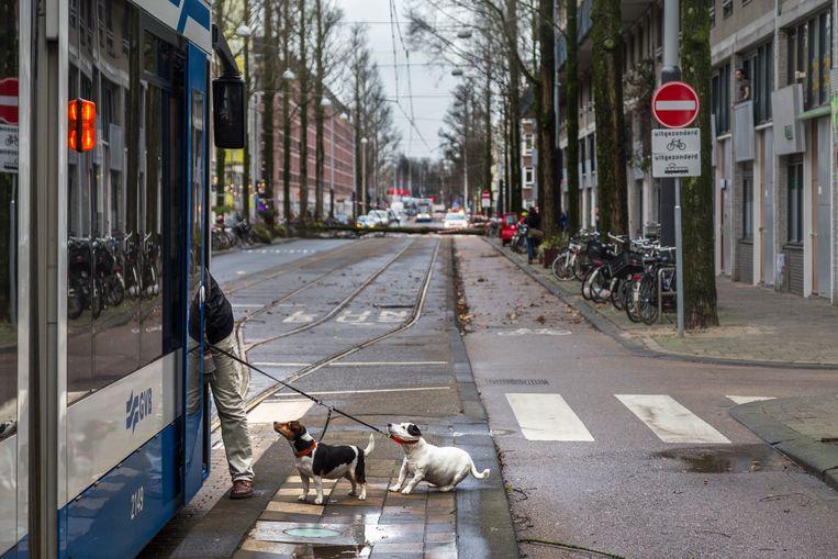 Deze tram rijd niet meer doordat er even verderop een boom op de leidingen is gevallen. Het baasje vraagt informatie in de tram, hondje wil niet mee. Beeld Pauline Niks