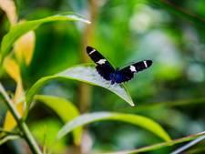 Duiven helpt bijen, hommels en vlinders een handje