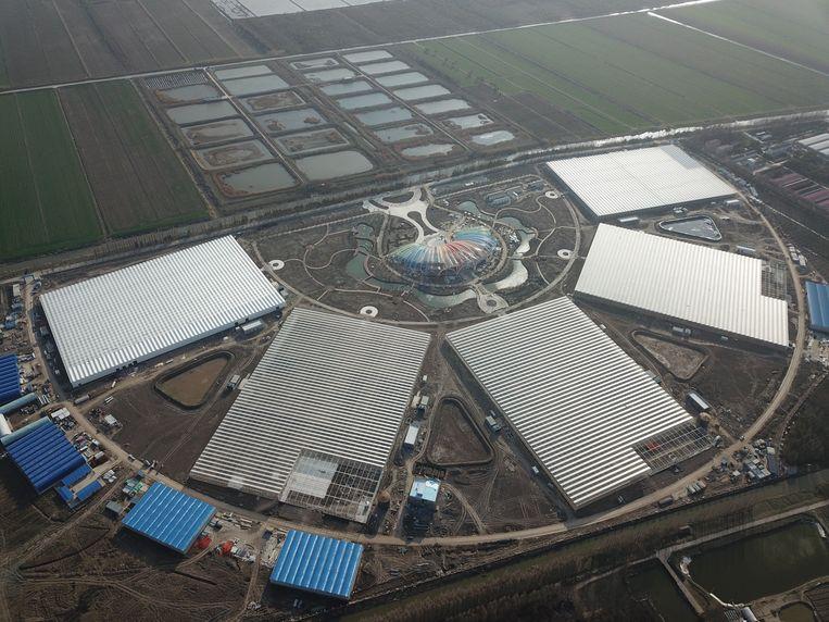 Het Nederlandse bedrijf FoodVentures heeft de leiding over de grootste groentekas van Shanghai. Op 15 maart gaan de eerste planten de kas in.  Beeld FoodVentures