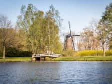 Blauwalg in gemeentevijver Nuenen ondanks experiment