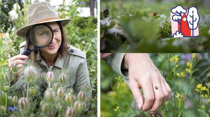 """""""In een doorsnee tuin fladderen zo'n 6 soorten vlinders rond"""": Laurence Machiels neemt je mee op safari... in je eigen tuin"""