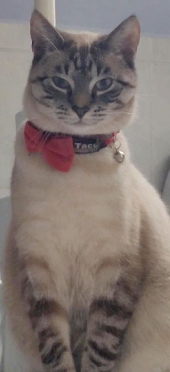 De kat draagt een rood lintje.
