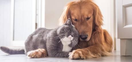 Gaia exige la fin des expériences sur les chiens et les chats en Belgique