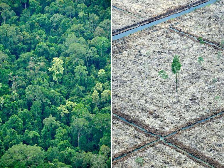 Ontbossing is een ernstig probleem in Indonesië. Beeld AFP