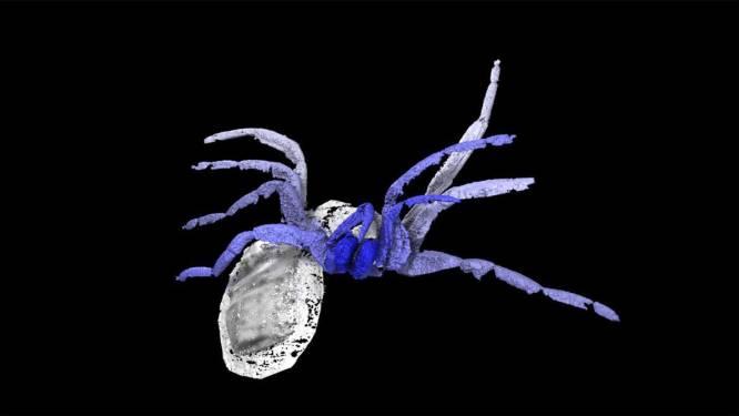 Dit griezelige fossiel onthult het geheim van het succes van de spin