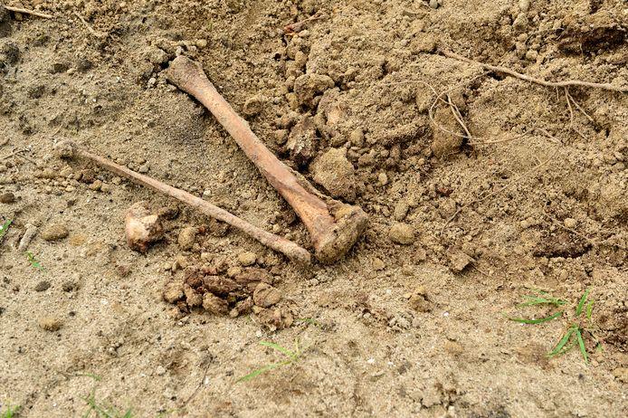 Op begraafplaats IJsselhof staken botten uit een hoop zand langs een pad. Waarschijnlijk resten uit een geruimd graf.