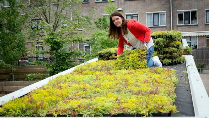 Je huis klimaatvriendelijker maken? De gemeente helpt een handje