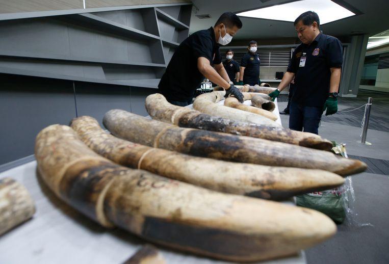 Thaise douaniers met in beslag genomen slagtanden (Bangkok,  januari 2018). Op de Aziatische markten blijft de vraag naar ivoor.  Beeld AP