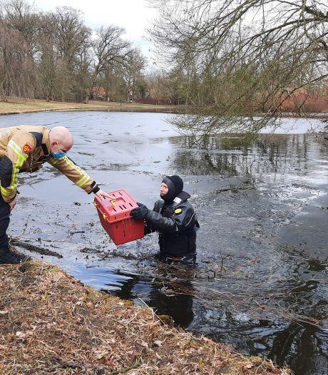 Kat begaf zich op glad ijs in Zwolle, maar is nu gered van onbewoond eiland
