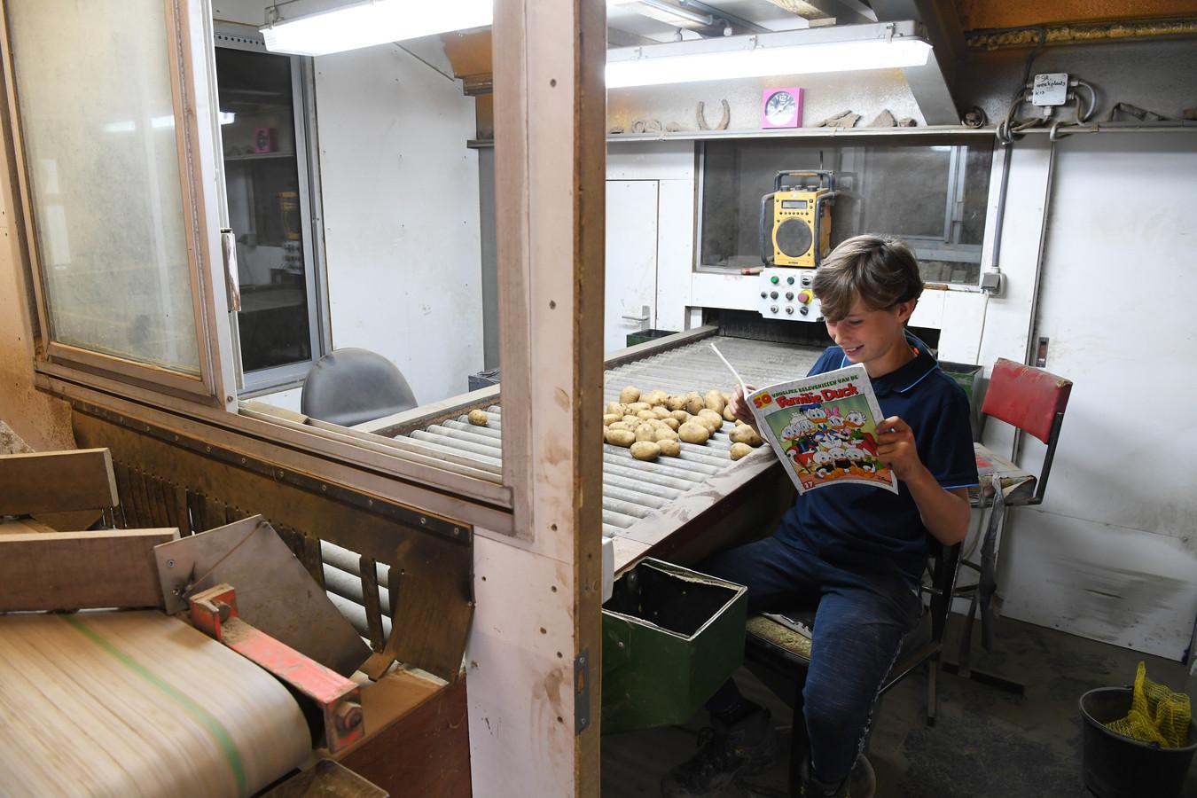 Thomas aan de leestafel, waar de aardappels worden gesorteerd