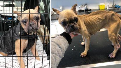 Zwaar verwaarloosde hond Mona is aangesterkt en heeft nieuwe thuis