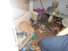Excréments au sol, parasites... Ces animaux vivaient dans des conditions exécrables