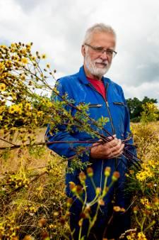 Dit giftige plantje neemt onze weides over: 'Ze lijken zo onschuldig, maar daarna...'