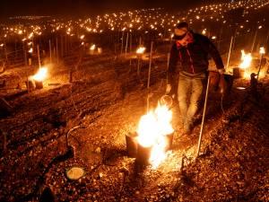"""Un gel catastrophique est en train de décimer les vignobles de France: """"Les viticulteurs sont abattus"""""""