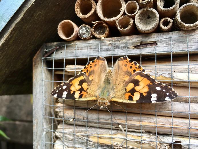 Deze vlinder neemt even vakantie bij dit insectenhotel in De Meern.