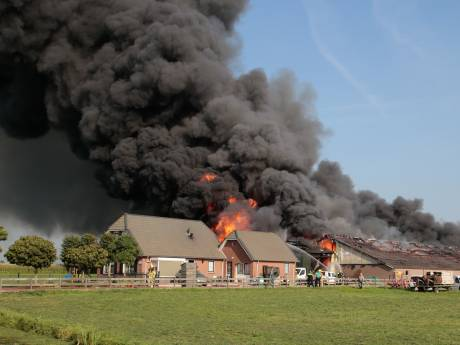 Bijna alle 1500 varkens hebben grote schuurbrand in Streefkerk niet overleefd