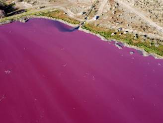 Lagune in Patagonië kleurt roze door vervuiling