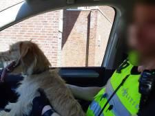 Agent haalt hond uit bloedhete auto. 'Hier zijn geen excuses voor'