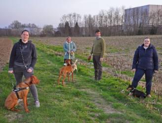 """Gemeente zoekt privégronden of -weides om honden te laten loslopen: """"Op die manier kunnen we hopelijk spreiden over volledige gemeente"""""""