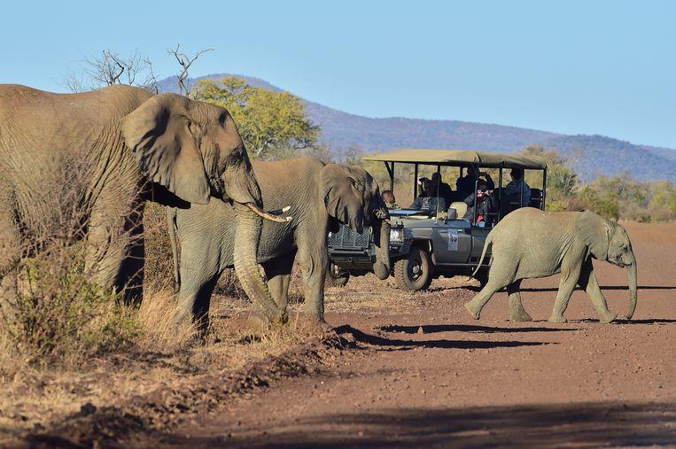 Olifanten in het natuurpark Madikwe. Beeld Flickr/South African Tourism