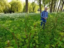 Zorgen Gemeenschapslijst over Japanse Duizendknoop in Hilvarenbeek