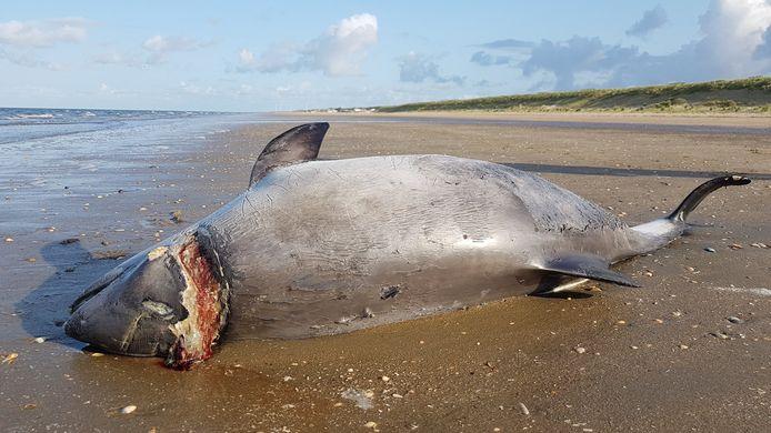 Een dode bruinvis.