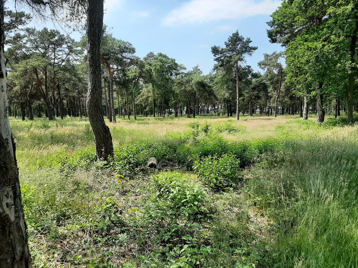 In dit bosperceel tussen de Tunnelweg en Oude Deventerweg in Haarle komt een recreatiepark met 114 chalets.