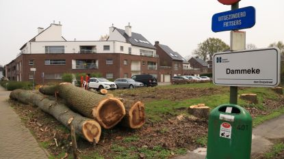 Commotie over gekapte bomen in 't Dammeke