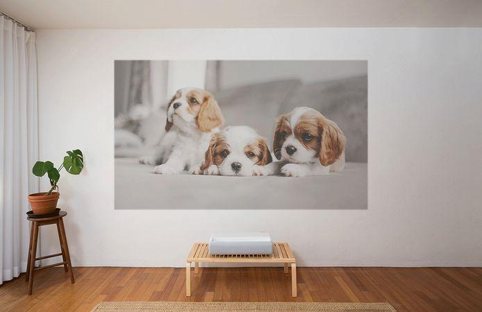 The Premiere blaast een beeld met schermdoorsnede van 120 inch tegen je muur.