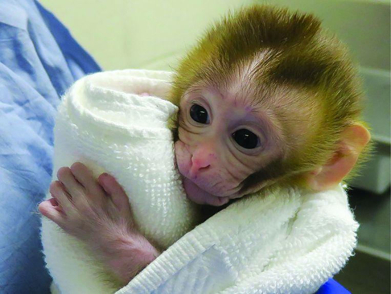 Het aapje Grady. Beeld AFP