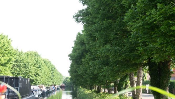 Stadsbestuur Oudenaarde snoeit binnenkort bomen in jachthaven: laatste onderhoudsbeurt voor de kap?