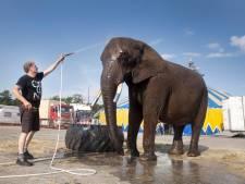 Buba de circusolifant tóch weer terug bij Circus Freiwald