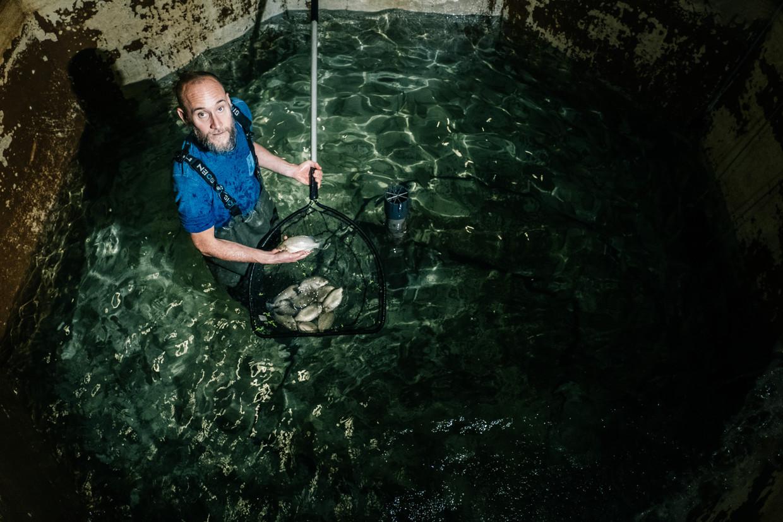 Stijn Van Hoestenberghe wil de wereld verbeteren met zijn omegabaars, de duurzaamste vis ter wereld. Beeld Wouter Van Vooren