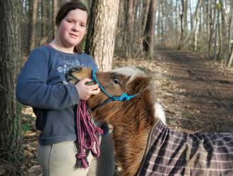 """Inès (20) wéét waar haar gestolen miniatuurpaarden zijn, maar kan blijkbaar niets doen: """"Eentje heb ik zelfs moeten terugkopen voor 350 euro. Mijn éigen paard, hé"""""""